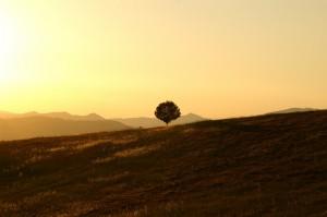 tree-189852_1280